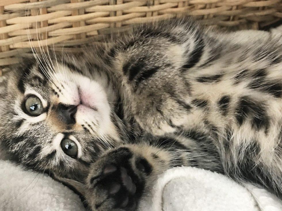 Wat kost een kat