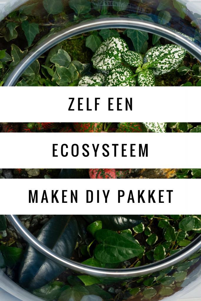 Zelf een ecosysteem maken